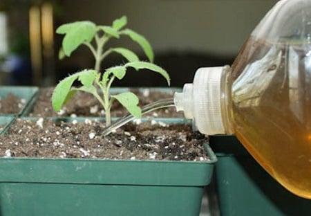 Beragam Manfaat Pupuk Organik Cair – Baca Di sini