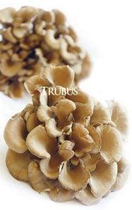 Di Jepang, jamur maitake diuji secara klinis kepada para pasien kanker dan tumor.
