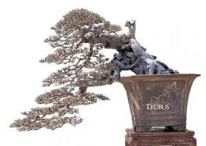 Bonsai-bonsai yang tampil di Sragen merupakan koleksi-koleksi terbaik.