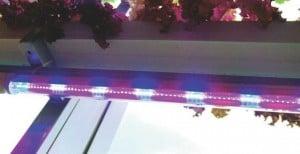 Cahaya LED sesuai kebutuhan fotosintesis dan irit listrik