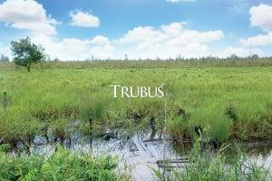 Semula lahan rawa hanya berupa lahan telantar yang ditumbuhi gelam muda atau pakis rawa