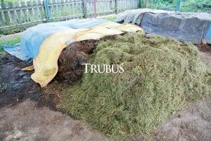 Pupuk hijau rumput kaya silika yang melindungi tanaman dari keracunan logam berat