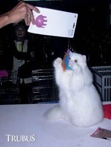 Sering mengajak kucing bermain juga dapat meningkatkan rasa percaya diri kucing.