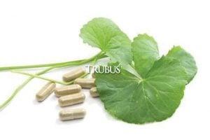 Pegagan atau antanan salah satu herbal untuk membantu mengatasi autisme.