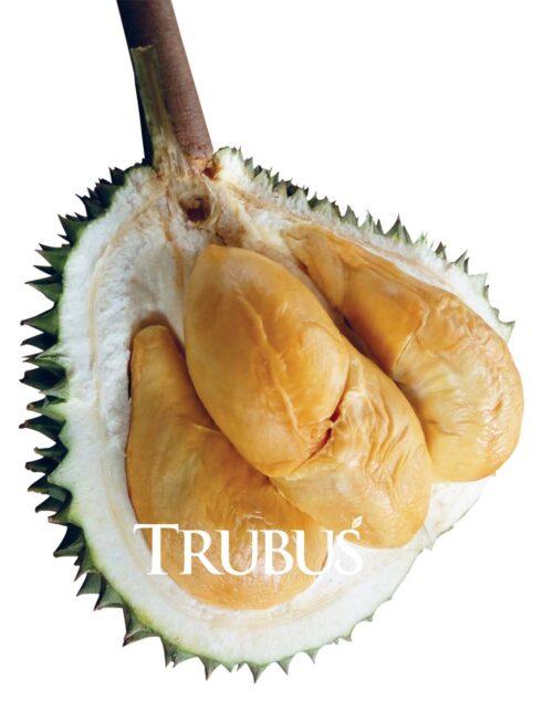Durian: Bukti Unggul di Tanah Baru