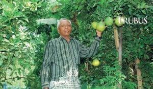 H Syahid menjual dekopon dengan harga tinggi, Rp60.000/kg.