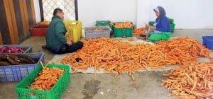 Harga sayuran seperti wortel kerap anjlok pada saat panen raya