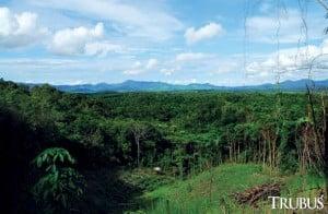 Pembalakan liar mengancam ekosistem trenggiling