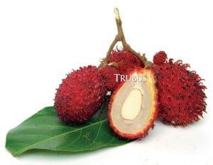 Kulit buah rambutan menjaga hati dari paparan radikal bebas.