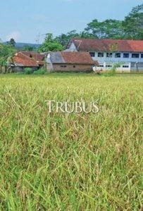 Produksi padi nasional 79 juta ton pada 2016.
