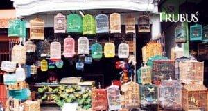 Pasar burung salah satu lokasi penjualan ulat hongkong