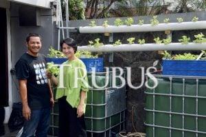 Iwan Gogo Panjaitan dan Maria Indira Manurung mengembangkan akuaponik di dak rumah dan dinding pagar untuk memperoleh sayuran sehat.