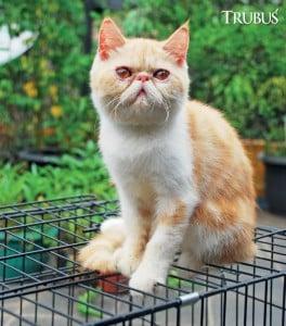 Setiap kucing memiliki kecocokan tersendiri dengan pakannya.
