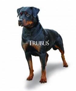 Anjing perlu pakan yang mengandung DHA untuk tingkatkan kecerdasannya.