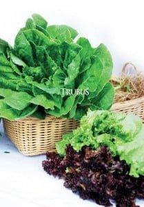Pasar sayuran hidroponik semakin meningkat.