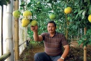 H Ino Suwarno mengebunkan dekopon dalam greenhouse.