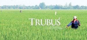PT Royal Agro Indonesia fokus mengembangkan fungisida dan herbisida yang masih memiliki ceruk pasar yang besar.