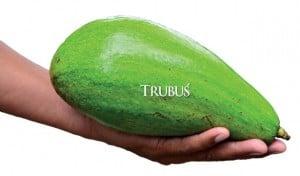 Dengan perawatan yang baik, bobot buah mencapai 1,3 kg