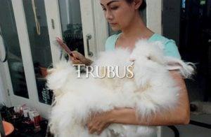 Amelia Trisna Irsan, rajin melakukan grooming dan menyisir sangat membantu mencegah gangguan kesehatan bulu dan kulit kelinci.